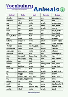 Animals Vocabulary (Animals, Baby, Male, Female, Group Names) - English Learn Site English Writing, English Study, English Words, English Grammar, Learn English, English Tips, English Lessons, English Language Learning, Teaching English