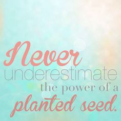 The power of a planted seed {and i'm not talking about flower seeds!}