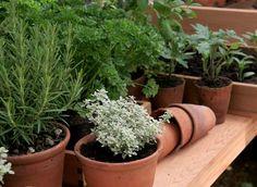 Как вырастить на подоконнике ароматную зелень