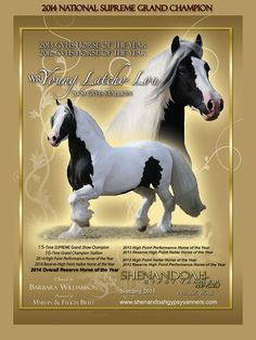 Lou's Stallion Ad Pretty Horses, One In A Million, North America, Fairy Tales, Gypsy, Dinosaur Stuffed Animal, Ads, Animals, Pictures