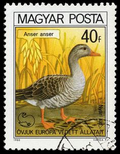 Country: Hungary Series: Birds Issued on: Catalog codes: Stamp Number HU Michel HU Yvert et Tellier HU Printing: Offset lithography Face value: f - Hungarian fillér Print run: Postage Stamp Design, World Birds, Stamp Printing, Vintage Stamps, Mail Art, Stamp Collecting, Pet Birds, Poster, Drawings