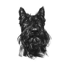 Scottie Sketch Print – PaintMyDog | Dog Art | Contemporary Dog Portraits JUSTIN OSBORNE