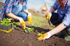 You should know the fact that gardening 101 is an art that requires a lot of patience for successful results. You have to take care right from the beginning to . Gardening Magazines, Gardening Tips, Gadget World, Vegetarian Salad Recipes, Plastic Flower Pots, Garden Guide, Garden Photos, Edible Garden, Trees And Shrubs