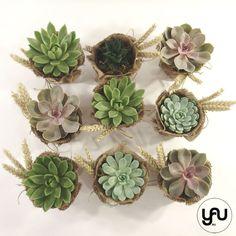 Marturii cu plante suculente | YaU BLOG Plantar, Succulents, Succulent Plants