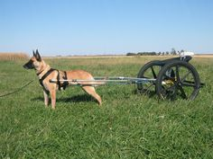 dog cart   And the harness I'm using right now is a basic padded harness: