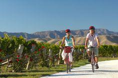 Biking the vineyards in Marlborough