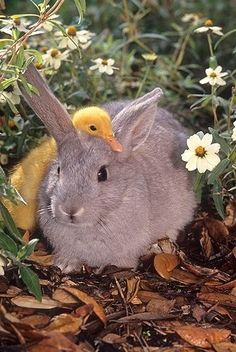 Bunny and duckling.