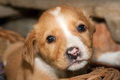 Stray puppy- free stock photo #freeimages #freephotos