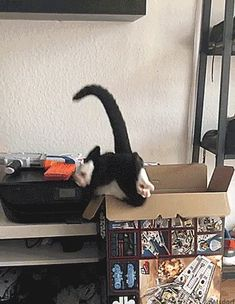 Funny Animal Memes, Funny Animal Videos, Funny Animal Pictures, Funny Animals, Kitten Love, I Love Cats, Crazy Cats, Cute Kittens, Cats And Kittens
