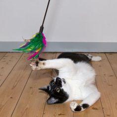 Wędka dla kota tanio w zooplus: Wędka dla kota z kolorowymi piórkami