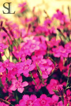 Sommergefühle - Blüten an Hauswand