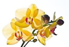 Orchideeën het hele jaar door verzorgen