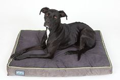 Better World Pets Thick Waterproof Orthopedic Memory Foam Dog Bed with 180 GSM Removable Washable Cover Medium 36 x 24 x 5 Dogs 2060 lbs Grey with Rave Green trim ** Find out more about the great product at the image link. Best Orthopedic Dog Bed, Pet 5, Pet Beds, Memory Foam, Pet Supplies, Your Pet, Puppies, Pure Products, Cats