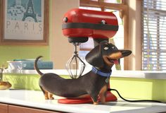"""Brinquedos inspirados no filme Pets – A Vida Secreta dos Bichos - """" The Effective Pictures We Offer You About trends memes A quality picture can tell you many thi - Pet Trailer, Movie Trailers, Pets Movie, Cinema, Ways To Be Happier, Kino Film, Secret Life Of Pets, Family Movie Night, Dachshund Love"""