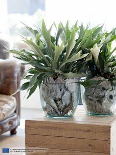 Farn ist die Zimmerpflanze des Monats April