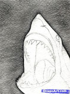 """In this tutorial, we'll be learning """"how to draw a shark head"""", step by step. Get your sketch pencil sets ready and an erase Fish Drawings, Realistic Drawings, Art Drawings Sketches, Animal Drawings, Drawing Animals, Drawing Designs, Shark Drawing Easy, Great White Shark Drawing, Shark Head"""