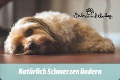 Wir leiden ja immer mit, wenn unsere Tiere Schmerzen haben. Dieses Öl von Andrea and the Dog wird innerlich angewendet und hilft gegen sämtliche Schmerzen und dient als Notfallmedikament für unterwegs.  #hunde #hundeliebe #hundepflege #andreaandthedog #naturpur #chemiefrei #kraftdernatur #bioqualität #dogs #petcare #ohnekonservierungsstoffe #handmadewithlove #steiermark #besterfreunddesmenschen #schmerzen #painrelief Leiden, Dogs, Animals, Animales, Animaux, Pet Dogs, Doggies, Animal, Animais