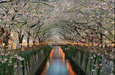 Tokyo, Japan. So beautiful, love the flowers !