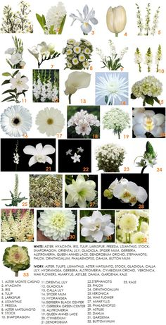 The Final Piece In Our Series On Color – White | Modern Petals Blog