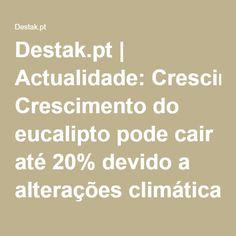 Destak.pt | Actualidade: Crescimento do eucalipto pode cair até 20% devido a alterações climáticas - especialista