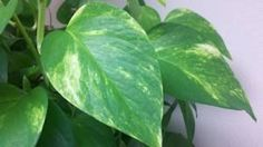 Wipe down the leaves of houseplants.