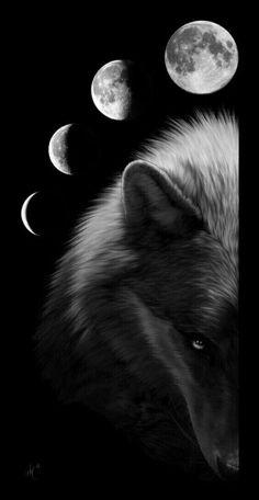 New Wolf Spirit Animal Art Full Moon Ideas Anime Wolf, Wolf Love, Beautiful Creatures, Animals Beautiful, Cute Animals, Wolf Spirit, My Spirit Animal, Wolf Stuff, Wolf Wallpaper