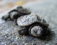 These remind me of Harold and Herman, the two baby sea turtles that DJ and I got to release into the ocean on our honeymoon.