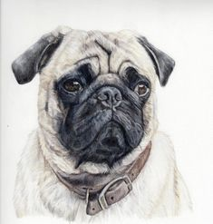 Custom Dog Portrait-colored pencil dog by PatouPetPortraits