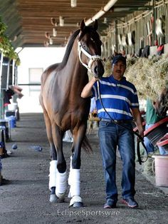Orb arrives at Saratoga before the Travers