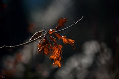 Winterleaves - Soon they will be gone ......