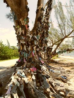 The shoe tree in Grand Cayman. :=)
