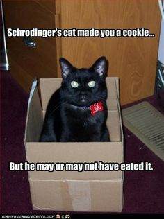 Schrodinger's cat made you a cookie...