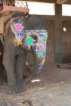 Painted Elephant Photo: This Photo was uploaded by brayergirl. Find other Painted Elephant pictures and photos or upload your own with Photobucket free ...