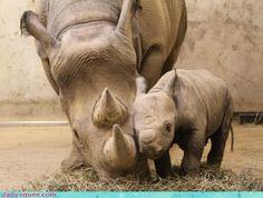 Awwww baby rhino