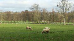Farm next to chateau de versailles