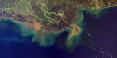 Tyson Foods Linked to Largest Toxic Dead Zone in US History