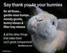 Say Thank you to your bunnies