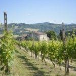Olivenöl, Wein - Genuß überhalb von Cesena und Galadinner in Cesenatico - TravellerblogTravellerblog