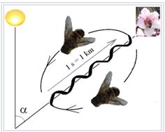 """Image of bees 'waggle"""""""