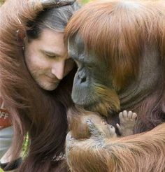 A new Sumatran Orangutang Mom shows off her baby to the curator.
