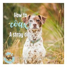 how to coax a stray / missing pet Fight Or Flight, Losing A Pet, Stray Dog, Beautiful Day, Your Dog, Pets, Animals, Animales, Animaux