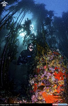 Reef & Free Diver in Cape Town - South Africa