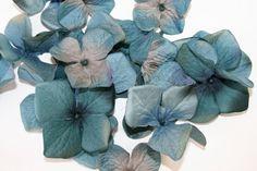20 Large Velvet Blend Hydrangea Blossoms in by simplyserra on Etsy, $6.25