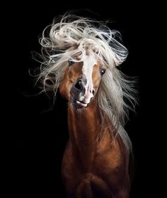 Fine art animal photography of multiple-award winning photographer Wiebke Haas. Find mesmerizing portraits especially of beautiful horses outdoor and in studio. All The Pretty Horses, Beautiful Horses, Animals Beautiful, Cute Animals, Beautiful Horse Pictures, Animals Amazing, Wild Animals, Beautiful Eyes, Beautiful Things