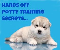 Want to learn a few hands off potty training secrets? Learn these and many other dog training tips using these hands-off methods. Click here to read more>> www.dog-names-and...