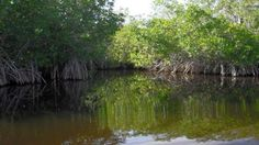 everglades national park   Everglades National Park bilder - Foton Everglades National Park