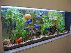 Another fresh water aquarium by Aquaholics Turtle Aquarium, Cichlid Aquarium, Tropical Fish Aquarium, Tropical Fish Tanks, Home Aquarium, Freshwater Aquarium Fish, Aquarium Design, Aquarium Fish Tank, Fish Ocean