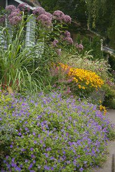 Eutrochium 'Gateway', Geranium 'Rozanne' & Rudbeckia 'Goldsturm'