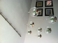 Floating air plants.  Air plants do not need soil just some rocks for the roots to grab on to.  Use some glass  globes to put them in.  Hang them from the ceiling with a shower rod, fishing line and hooks. Looks wicked cool and real easy to maintain. use a spray bottle to give them water once a day.