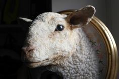 Used To Be Loved Sheep. https://www.facebook.com/AnnabelMontgomerie